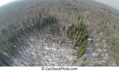 Flying over mixed forest with conifer trees and birches, winter scene