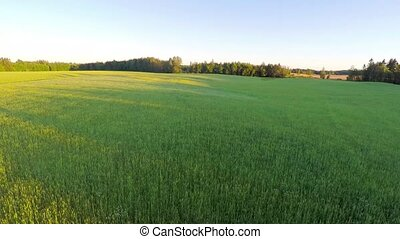 Flying over organic barley field at large farm - Camera...