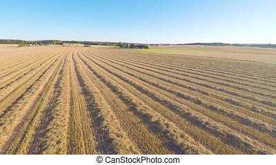 Flying over organic grain fields after harvest on a farm -...