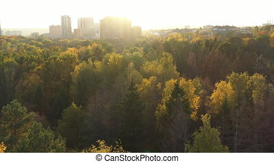 Flying over the autumn forest with colorful trees. On the horizon you can see houses on which the bright rays of the sunny fall. Walk through the woods in warm weather. Many trees from a height.