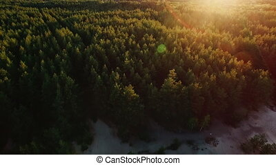 Flying over the forest on the background of the setting sun