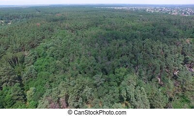 Flying over the forest park