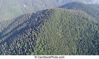 Flying over the high mountains with pine forest in beautiful clouds. Aerial view