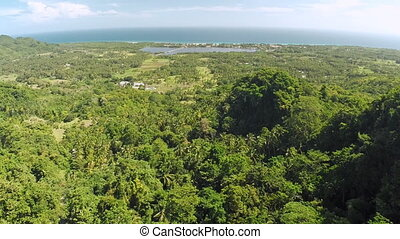 Flying over the jungle. Philippines. Anda city.
