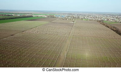 Flying over the orchard. Aerial