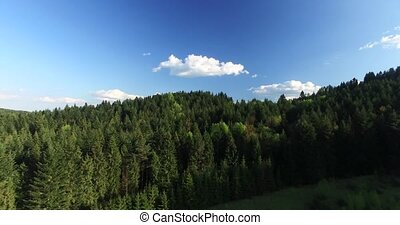 Flying over the pine forest on a hilltop. Aerial view