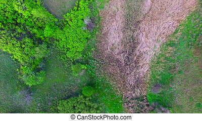Flying over the ravine spring. Beautiful nature. Aerial...