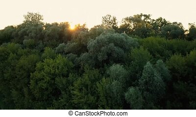 Flying over the trees at dawn - aerial videotaping - Sunset...