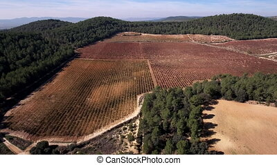 Flying over vineyard, autumn