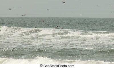 Flying Pelicans