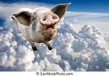 Flying Pig - A pig flying through the clouds in the sky