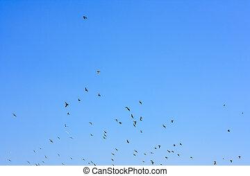Flying pigeons on blue sky background
