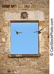 Flying pigeons