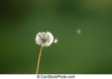 Flying pollen of a flower
