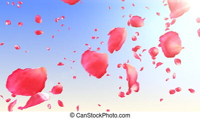 Flying rose petals in the sky. HD.