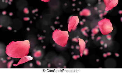 Flying rose petals with DOF. HD.