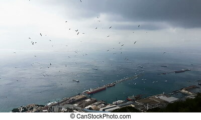 Flying sea gull in Gibraltar - Flying sea gull and landscape...