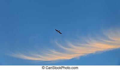 Flying seagull against blue sky