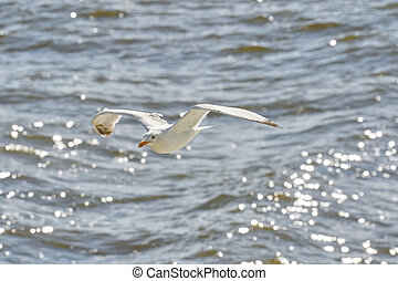 flying seagull against the sea, with the reflection of the sun in the water