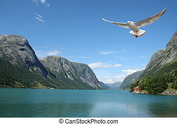 flying seagull and norwegian fjords - a seagull flying over...