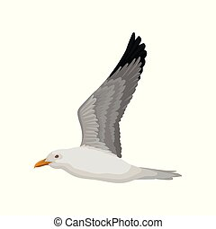 Flying seagull, gray and white sea bird, side view vector...