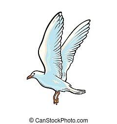 Flying seagull, hand drawn vector illustration