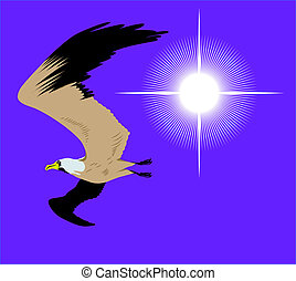 flying seagull in sky with bright sun