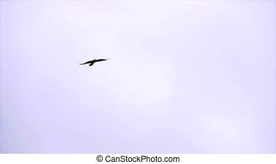 Flying seagull in the sky.