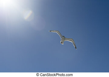 Flying seagull on a blue sky with a bright sun an light beams
