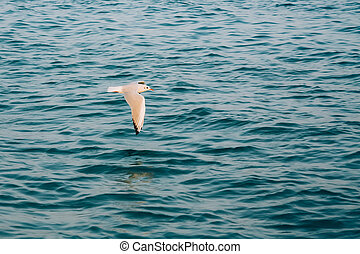 Flying Seagull Over Blue Ocean Sea Water