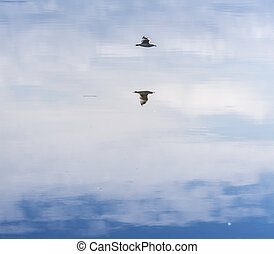 flying seagull over water surface