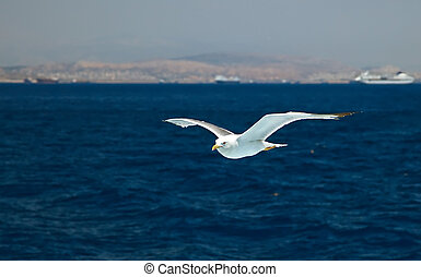 Flying seagull over blue water background