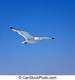 Flying seagull over blue sky background