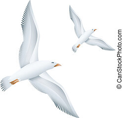 Flying seagulls birds. Eps10 vector illustration. Isolated...