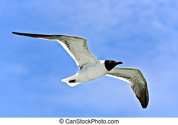 flying seagulls over the ocean