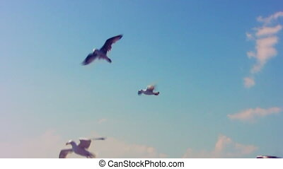 Flying seagulls taking food from hu