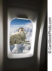 A flying sheep outside a plane window