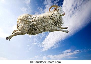 Flying Sheep - A flying sheep through a beautiful blue sky