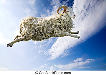Flying Sheep - A flying sheep through a beautiful blue sky