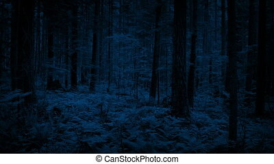 Flying Through Dense Woodland In The Dark - Flying low to...