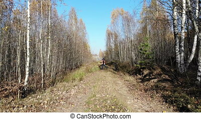 Flying through the trees in autumn yellow forest, sunny day...