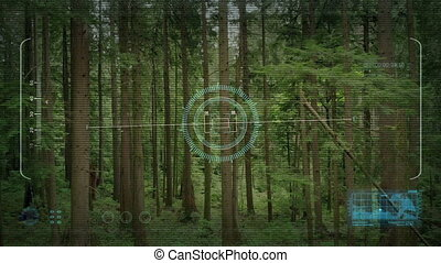 Flying Through Woods Drone POV