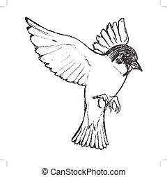 flying tit bird - vector, sketch, hand drawn illustration of...