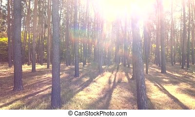 flying trough forest. tree woods. sun flare. nature...