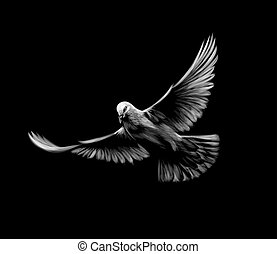 Flying white dove on a black background.