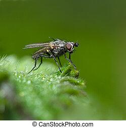 Fly,macro -  close up of a tiny fly