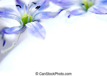 flytande, blomningen