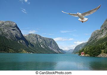 flyve, seagull, og, norsk, fjorde