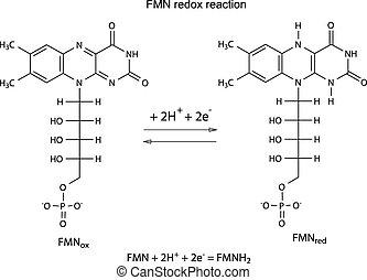 fmn, reação, redox, ilustração