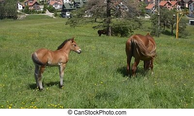 Foal and Mare in a Spring Field